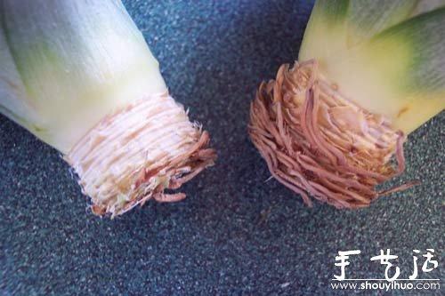 在家种菠萝图解教程 -  www.shouyihuo.com