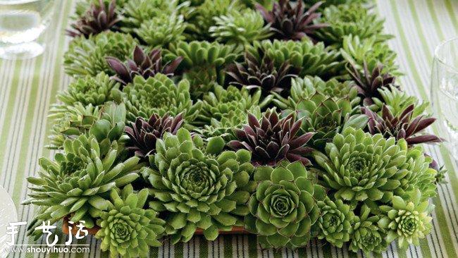 多肉植物  在欧式的家居装饰中