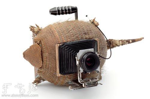 龜殼、穿山甲殼和動物角手工製作的相機
