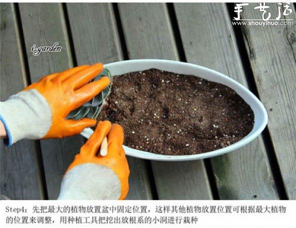 多肉植物手工盆栽diy