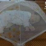 餐桌盖的妙用 让宝宝无视蚊子骚扰