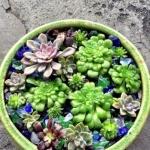 石莲花属多肉植物DIY睡莲盆栽