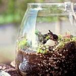 DIY装饰性玻璃瓶盆栽