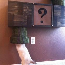 爱猫人士制作的猫咪『超级马里奥』猫爬