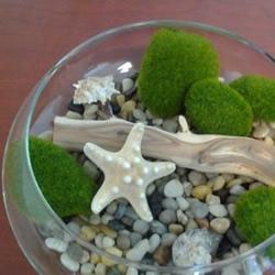 海洋风家庭装饰盆景DIY教程