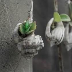 海螺贝壳DIY制作悬挂式装饰盆栽的方法