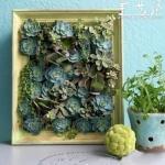真正植物画框DIY方法