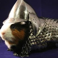 手工达人给荷兰猪打造的钢铁铠甲