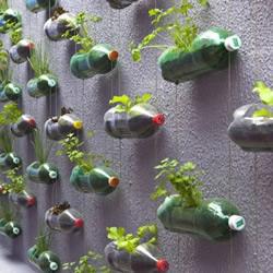 DIY墙上的垂直塑料瓶花园