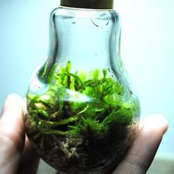 手工DIY老式灯泡生态瓶