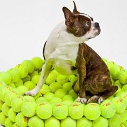 环保DIY:用旧网球制作的美丽饰品