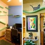 宠猫到极致的爱猫人士的家居设计