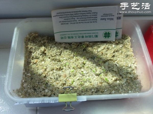 超详细水培种菜教程 家里也可以方便种菜啦! -  www.shouyihuo.com