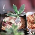 萌萌肉肉的漂亮多肉植物介绍