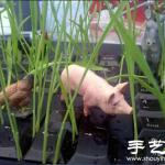 DIY长草的恶搞键盘