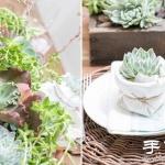 创意DIY小清新多肉植物盆栽