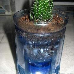 塑料瓶饮料瓶废物利用DIY不用浇水的花盆