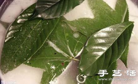 树叶标本怎么做 树叶标本制作方法_陕西五谷画-菩提画