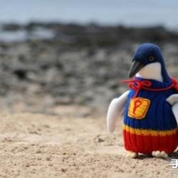 给企鹅穿上针织毛衫