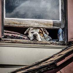 要融化了!超可爱动物们穿透窗户的凝视