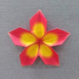 樱花的折法 手工折纸盛开樱花图解教程