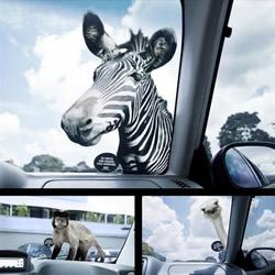 13个充满视觉冲击力的动物园创意广告
