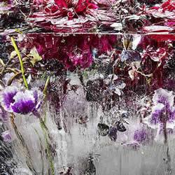创意冰封花草植物摄影DIY 美得像一幅油画