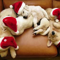 圣诞节到啦 手艺活小编带着宠物们来祝福
