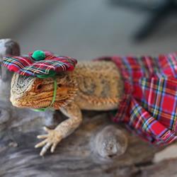 害怕蜥蜴?那你一定没见过帅气的 Pring
