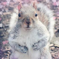 口袋里放些胡桃去登山 松鼠会怎么反应?