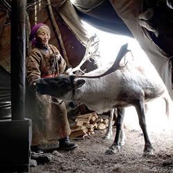 蒙古游牧民族杜科哈 靠驯鹿提供生活的一