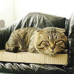 利用废旧纸箱制作舒适的猫窝的方法图解