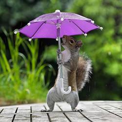 躲雨松鼠的撑伞萌照 带给你一整天的好心情