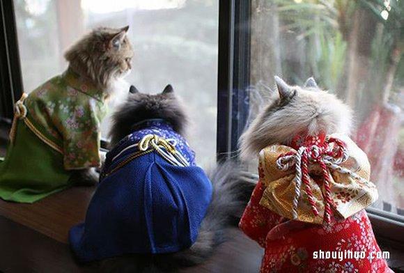 穿着充满喜气,非常具新年气息的红色和服,猫咪乖乖地卧在榻榻米上.