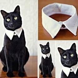 破旧衬衫废物利用DIY手工制作绅士猫项圈