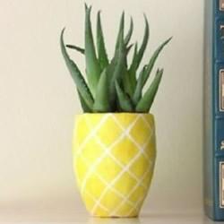 自制陶土花盆的方法图解 菠萝花盆DIY制作教程