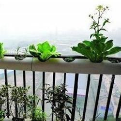 PVC管种菜设计图 利用PVC管阳台种菜的方法