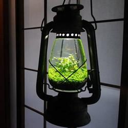 煤油灯改造成水族箱 当然也可以拿来种盆