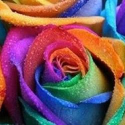 利用虹吸原理DIY制作彩虹玫瑰花的方法教程