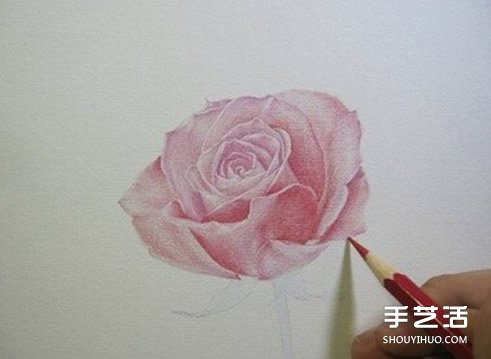 彩铅玫瑰花的画法步骤 玫瑰花彩色铅笔画教程图片
