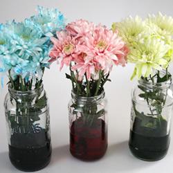 利用食用色素晕染鲜花的简单科学小制作