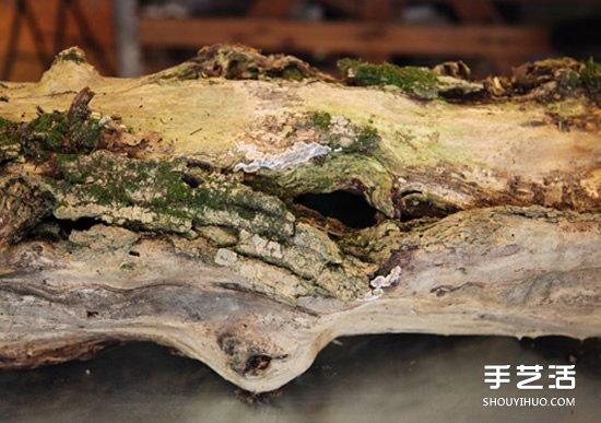 枯木废物利用DIY花盆 制作森林系插花装饰 -  www.shouyihuo.com