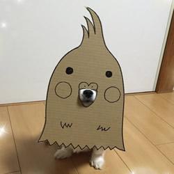 厚纸板+狗鼻=宠物变身 看主人怎么恶搞小可爱