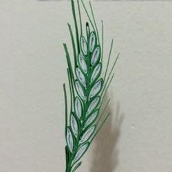 如何衍纸麦穗的方法 手工制作卷纸麦穗图