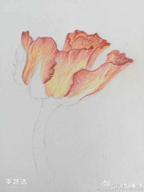 彩铅画花卉绘画教程 花朵彩铅画的画法步骤