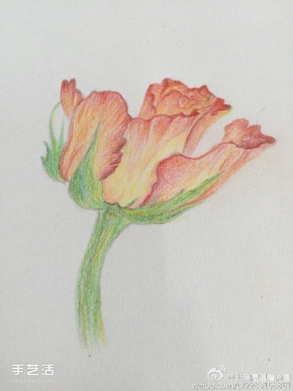 花朵彩铅画的画法步骤