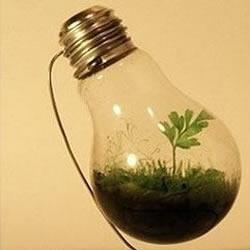 废旧灯泡制作花盆 DIY迷你盆景的方法步骤
