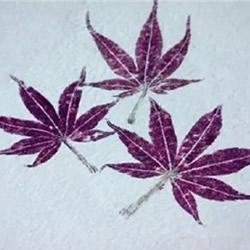 树叶拓印画怎么做 自制树叶拓印画步骤图