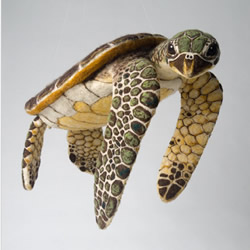 超逼真的羊毛毡海龟 让人不敢置信的手工作品