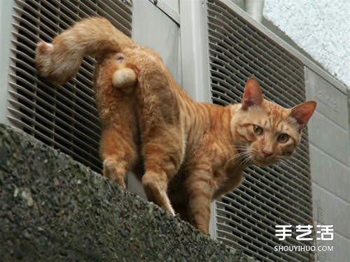 猫咪蛋蛋羊毛毡作品 直接挂墙上太害羞了吧! -  www.shouyihuo.com